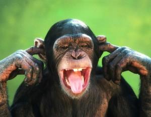 mono sordo